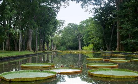 ботанический сад екатеринбург